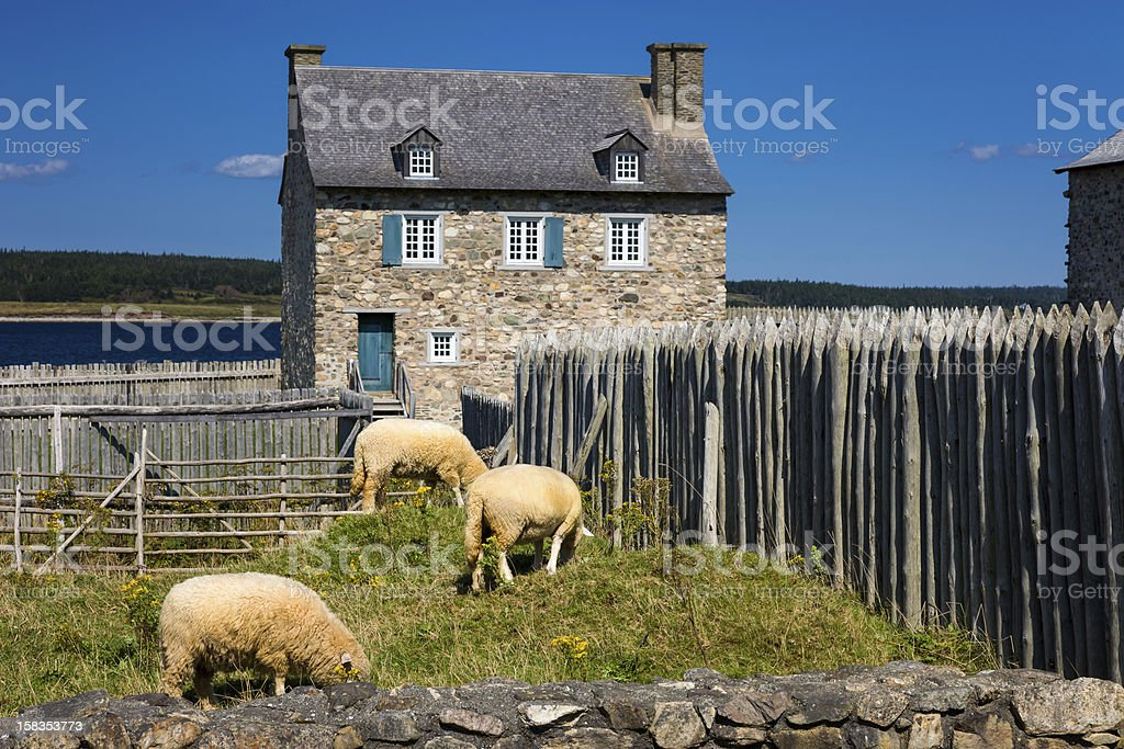 Sheep, fence and old house stock photo