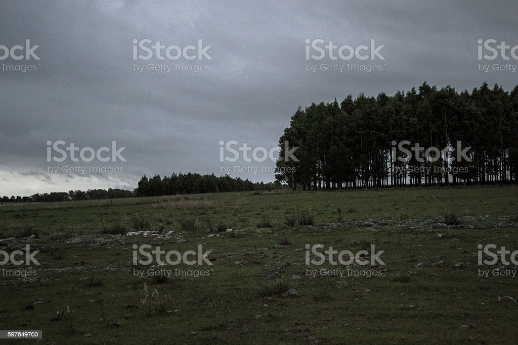 sheep folk and cowns at gray field shield stock photo
