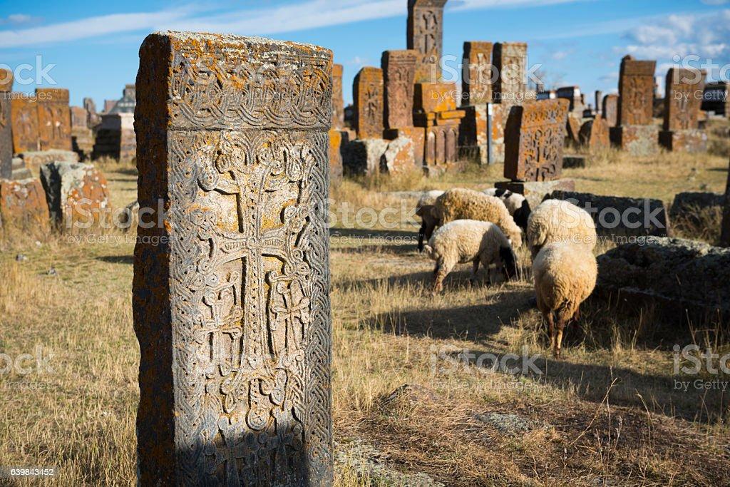 Sheep grazing in Noratus cemetery, Armenia stock photo