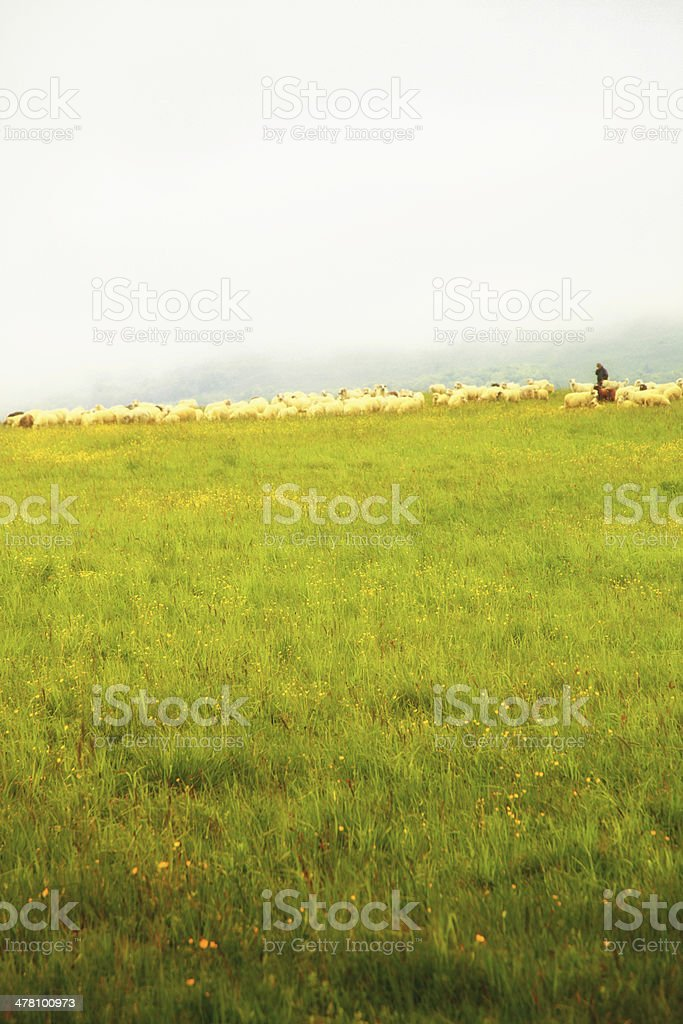 Sheep herding at a pasture on the hill royalty-free stock photo