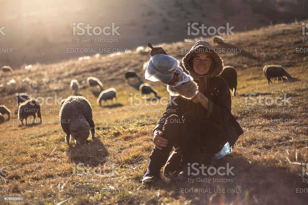 Sheep herding woman stock photo