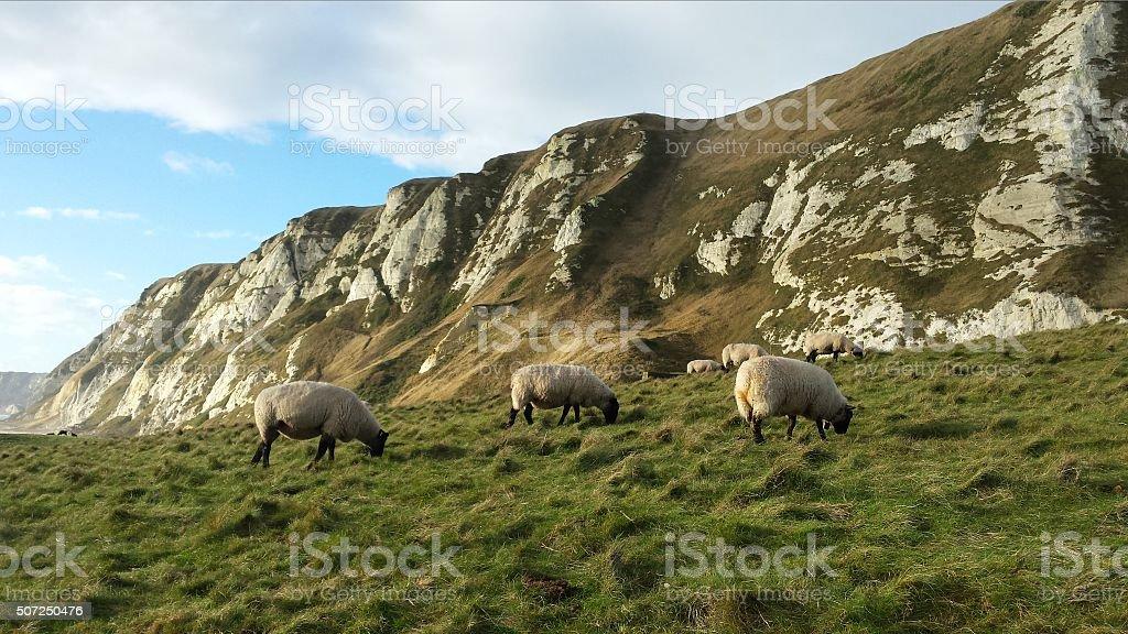 Sheep Hills stock photo