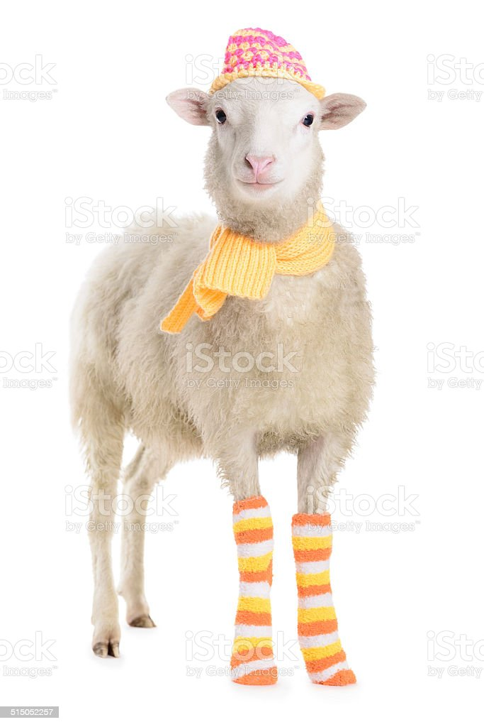 [Image: sheep-in-clothes-picture-id515052257]