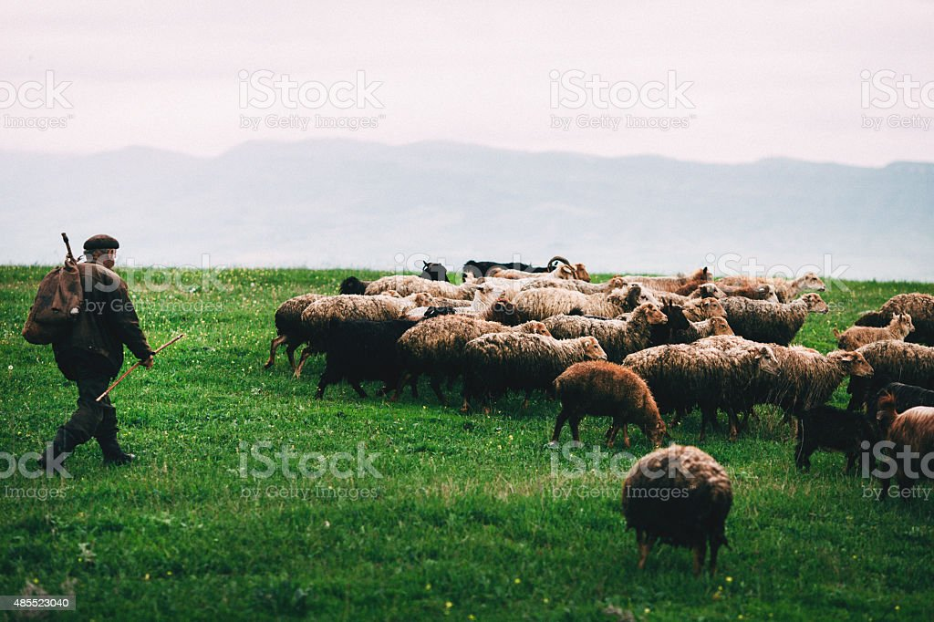 Sheep in mountains stock photo