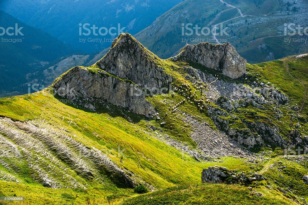 Sheep in the green hills of the mountains stock photo