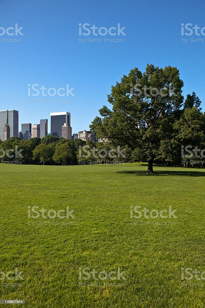 Sheep Meadow royalty-free stock photo