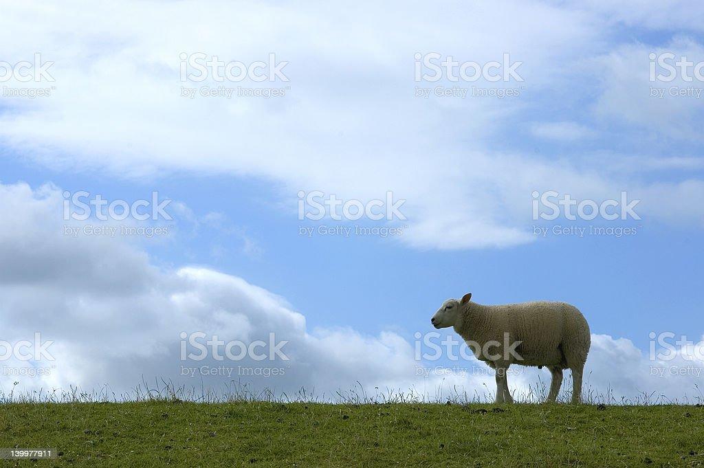 羊の・ディケ ロイヤリティフリーストックフォト