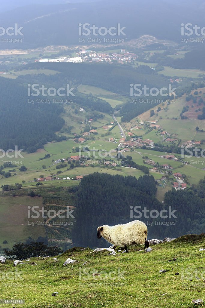 sheep on cliff of mountain. Basque Country royalty-free stock photo