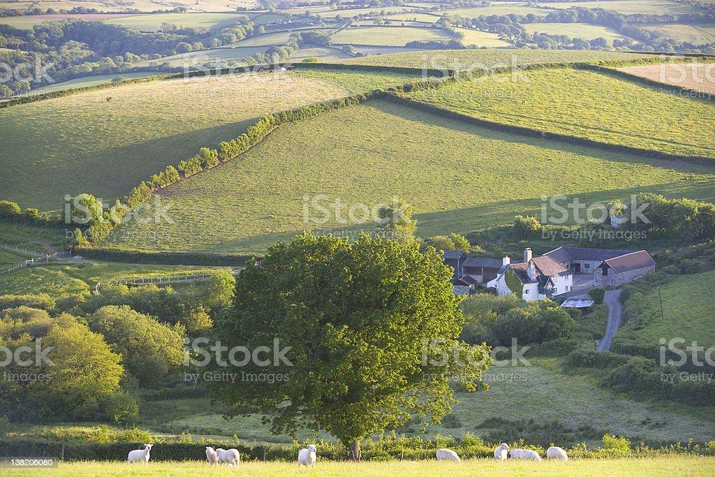 Sheep on Dartmoor, England royalty-free stock photo