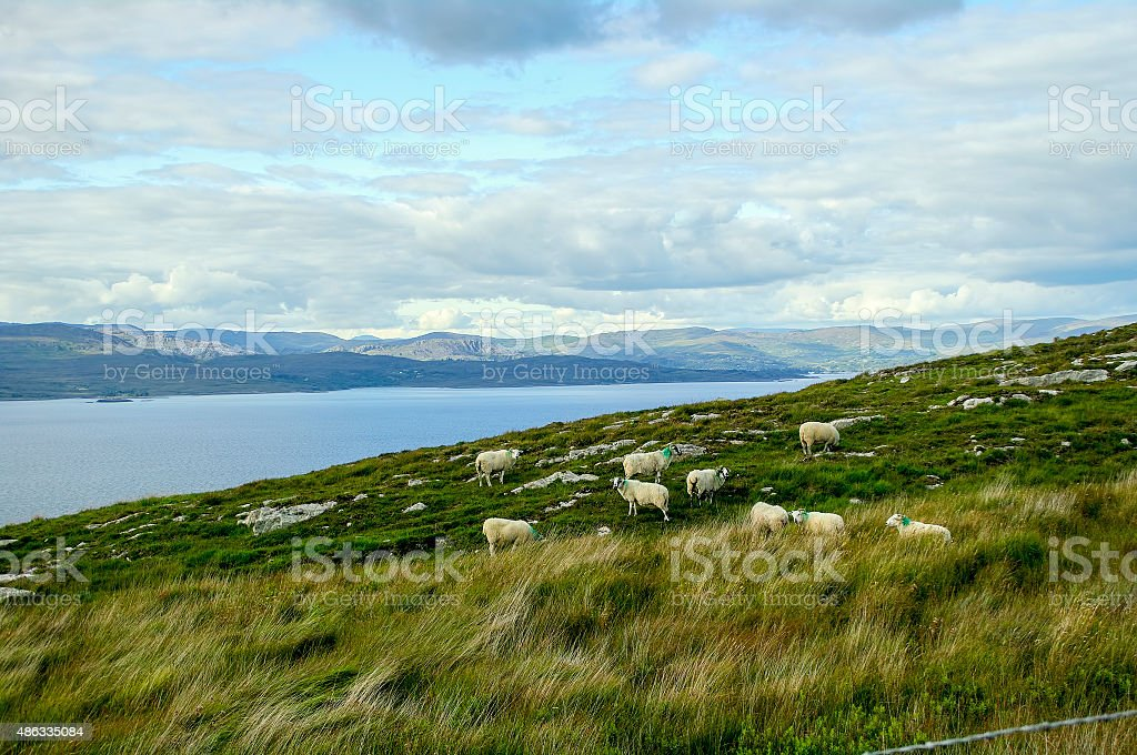 Sheep on hillside stock photo