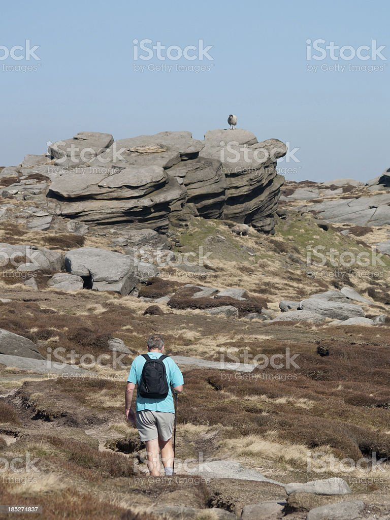 Sheep on Kinder Scout stock photo