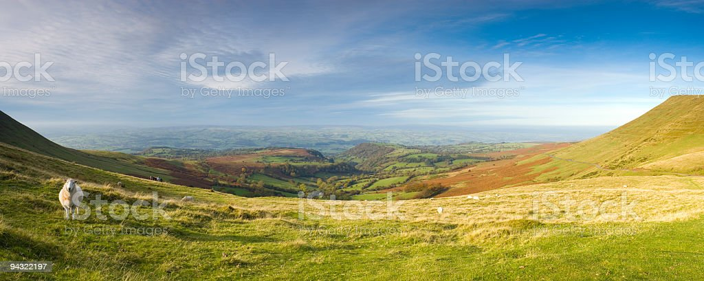 Sheep on mountainside royalty-free stock photo