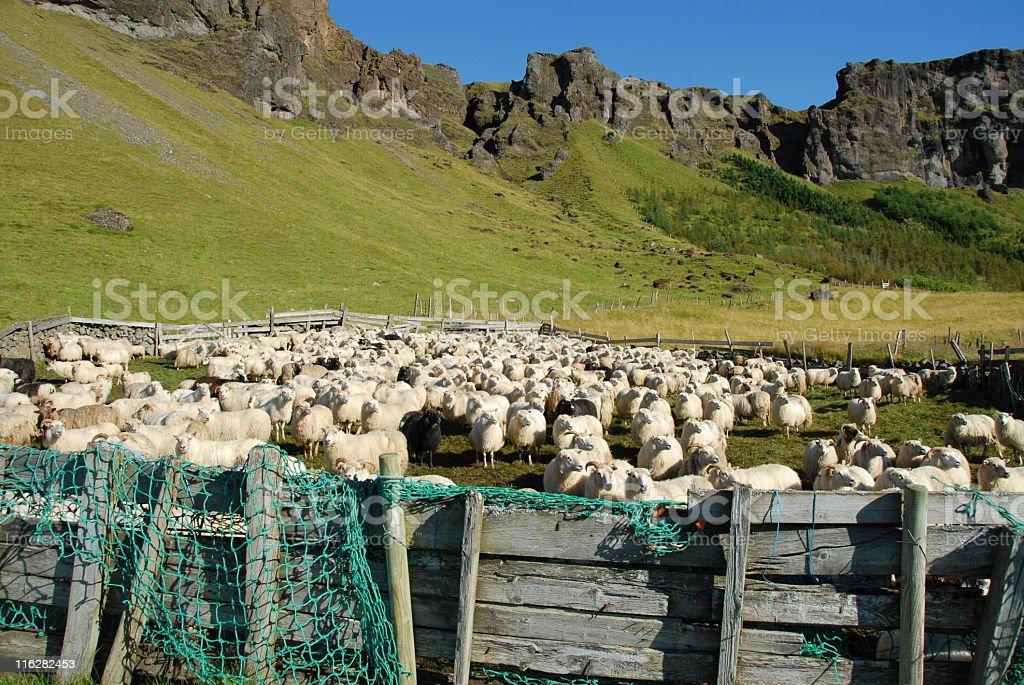 Sheep pen stock photo