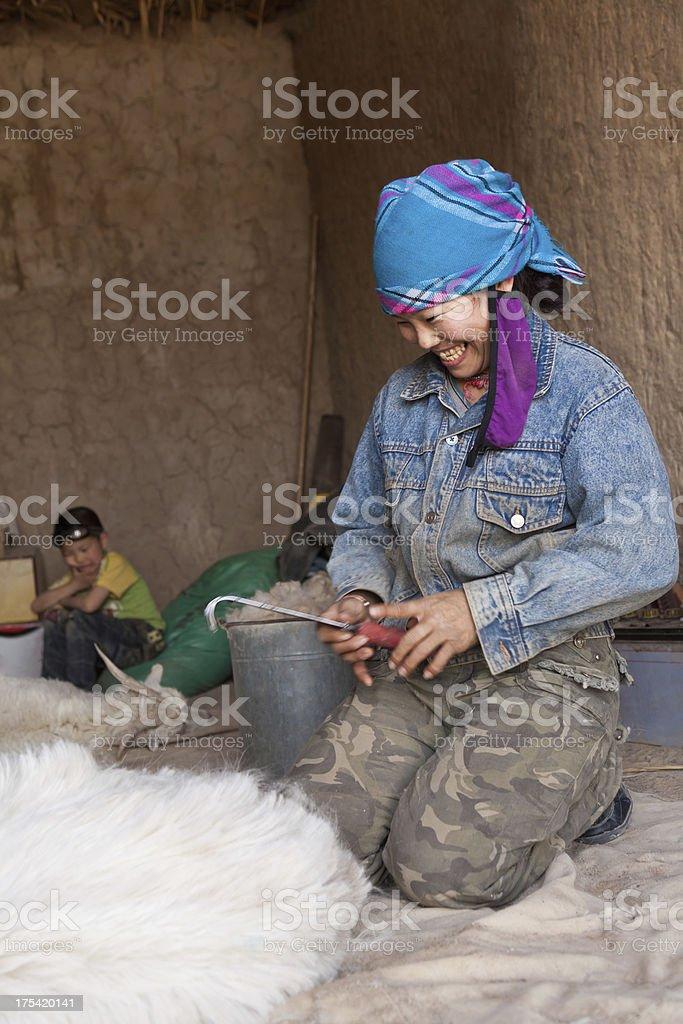 sheep shearing in home stock photo
