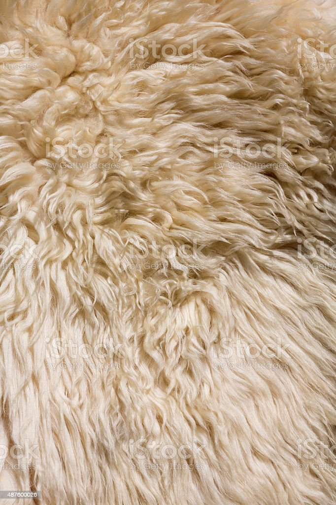 Sheep skin at a market in Transylvania stock photo