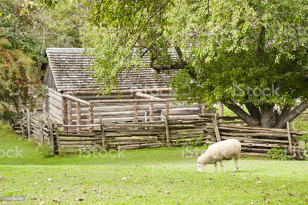 Sheep Under The Apple Tree royalty-free stock photo