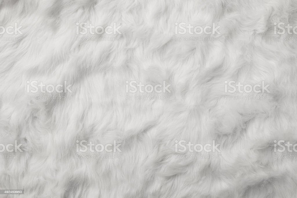 Sheep Wool as background stock photo