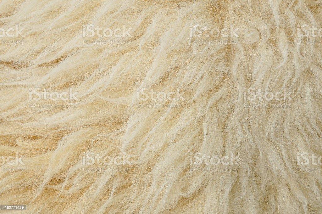 Sheep wool Background royalty-free stock photo
