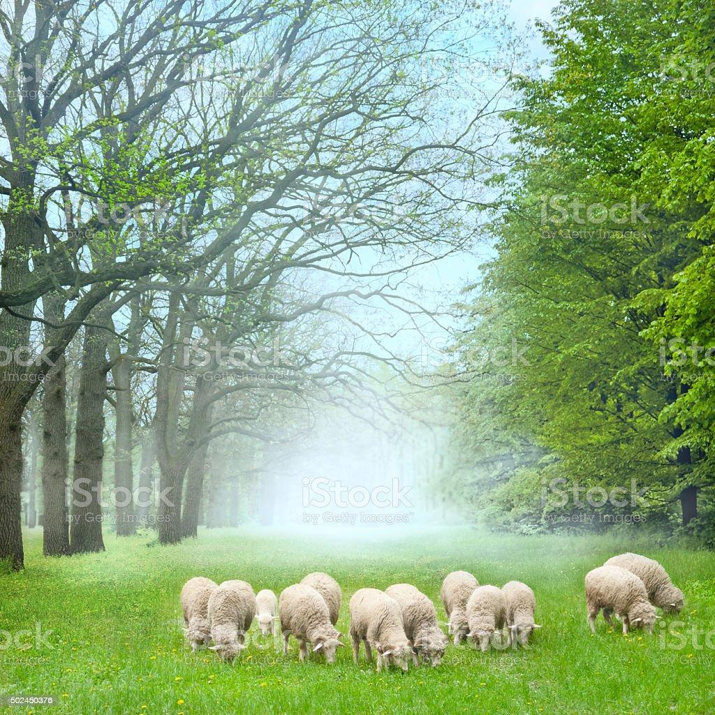 Sheeps in the Garden stock photo
