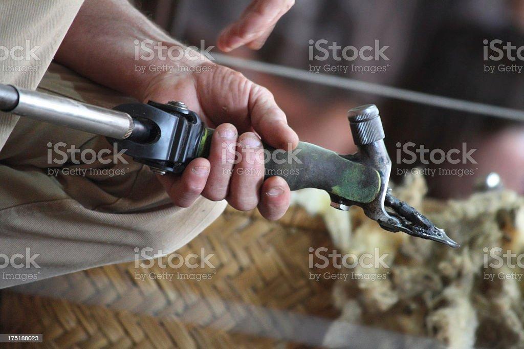Sheeps Shearing Tool stock photo