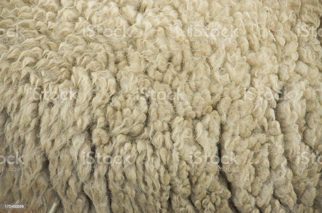Sheep's Wool stock photo