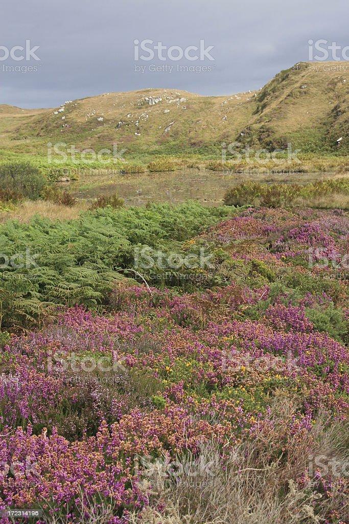 Sheepshead Peninsula, Peat Bog stock photo