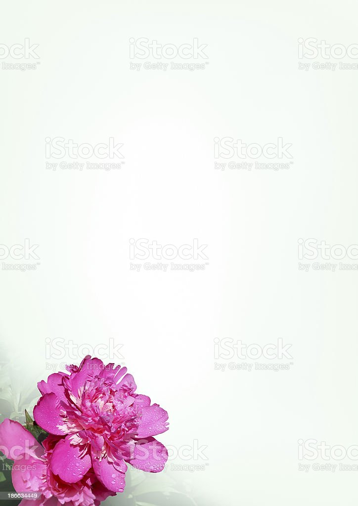 Sheet of paper with a flower peony royalty-free stock photo