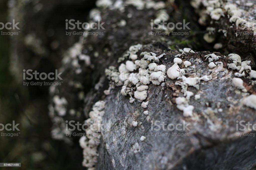 Shelf Fungi stock photo
