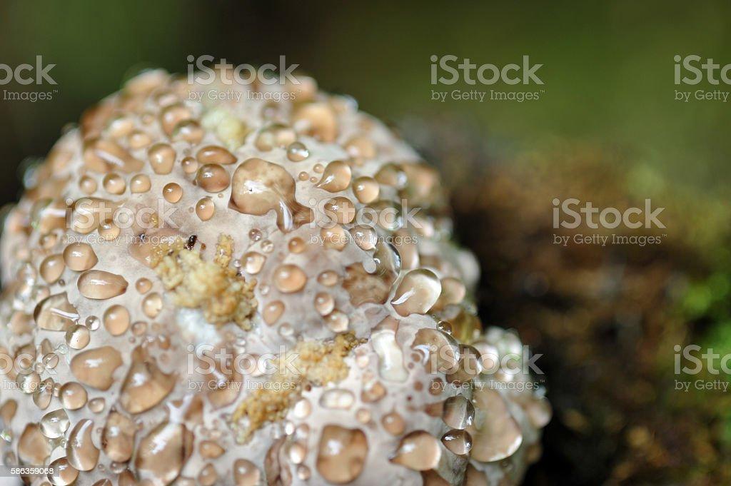 Shelf fungus stock photo