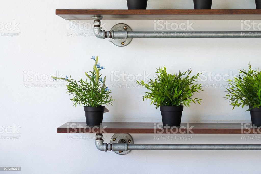Shelf plant stock photo