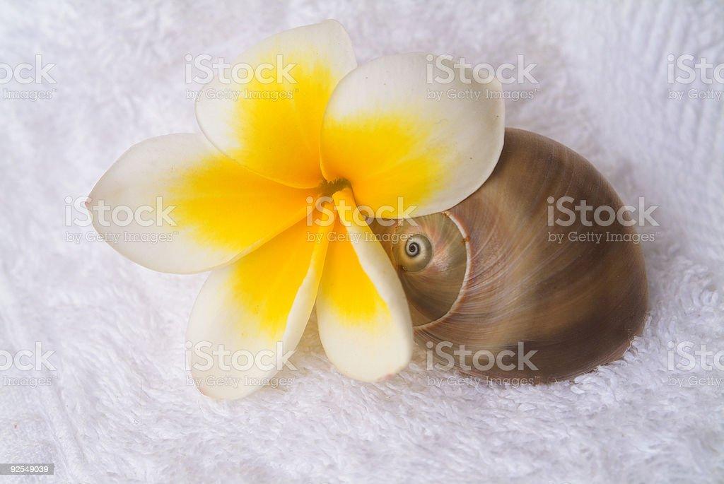 shell around flower stock photo
