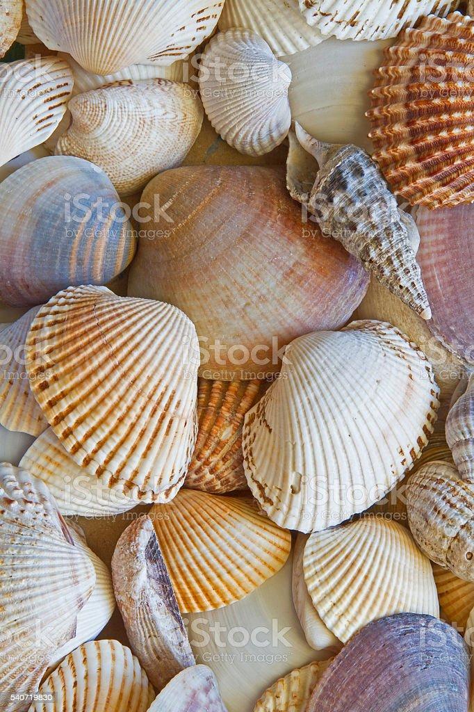 Shell background stock photo