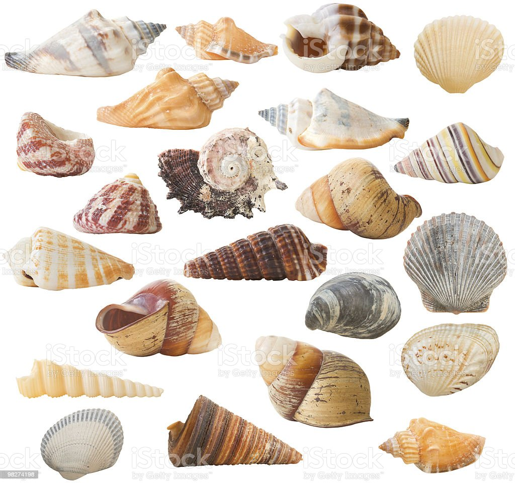 Shell Collection, isolated royalty-free stock photo