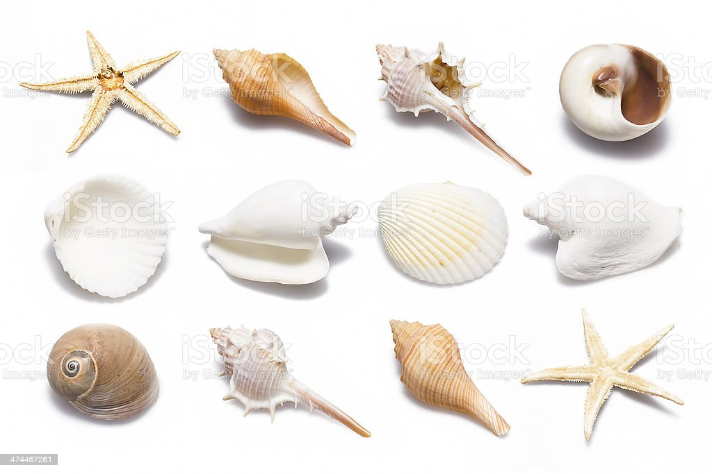 Shell Collection stock photo
