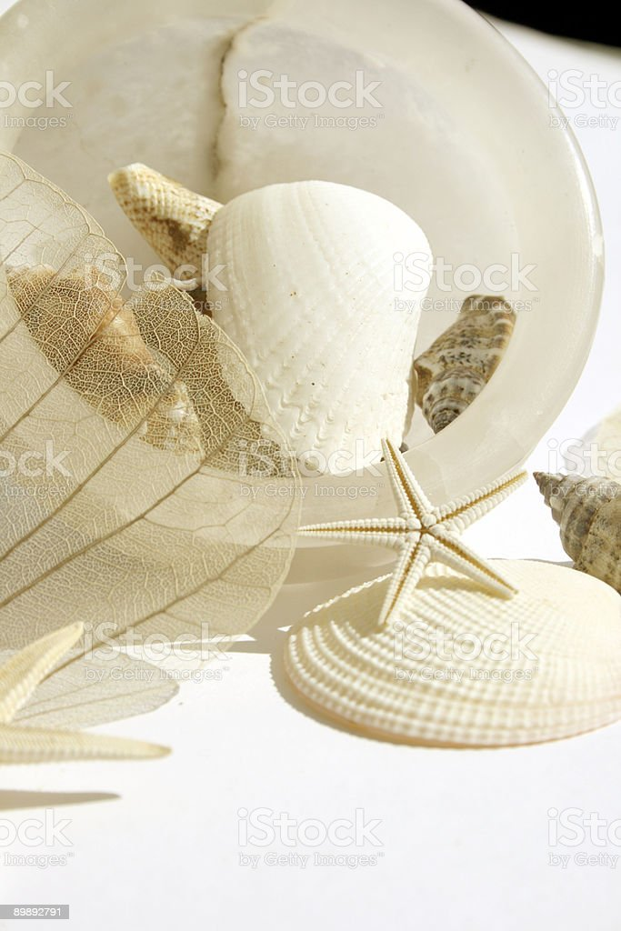 Shell collection royalty-free stock photo