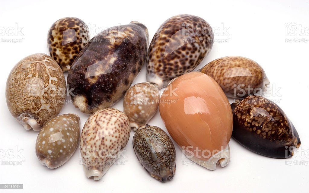 Shell Collection (cowries) stock photo
