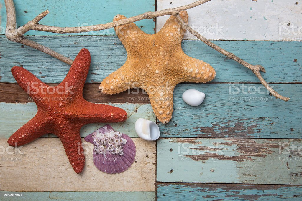 shell colors on the background of wood stock photo