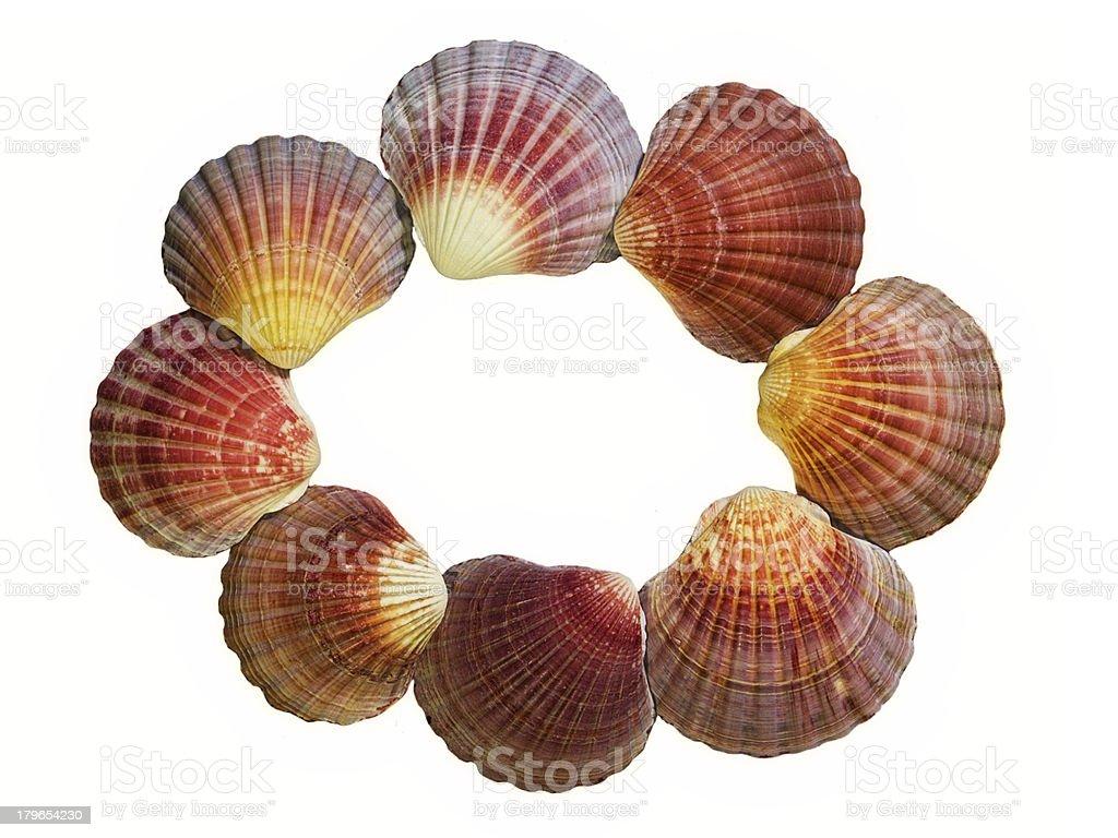 Shell Frame royalty-free stock photo