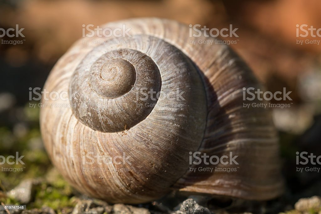 Shell from Snail stock photo