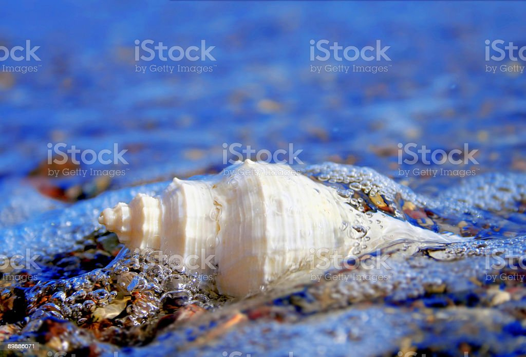 shell in sea royalty-free stock photo