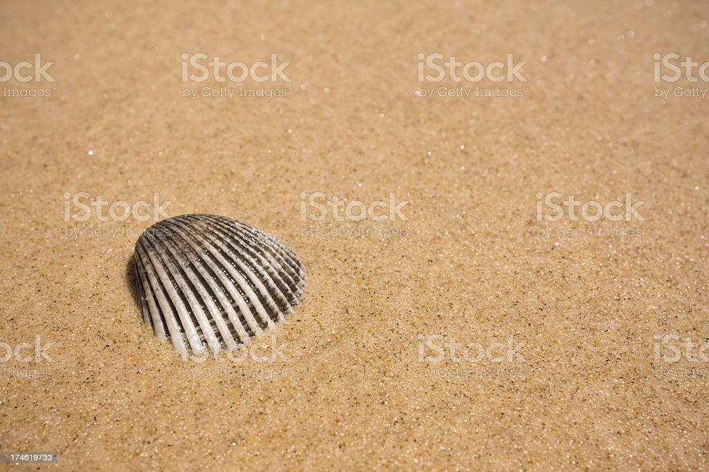 Shell in the sand macro royalty-free stock photo