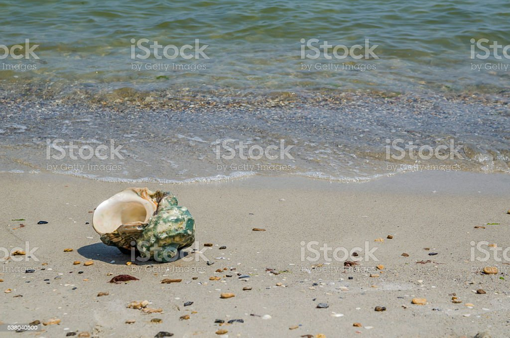 Shell in the sand on the beach stock photo
