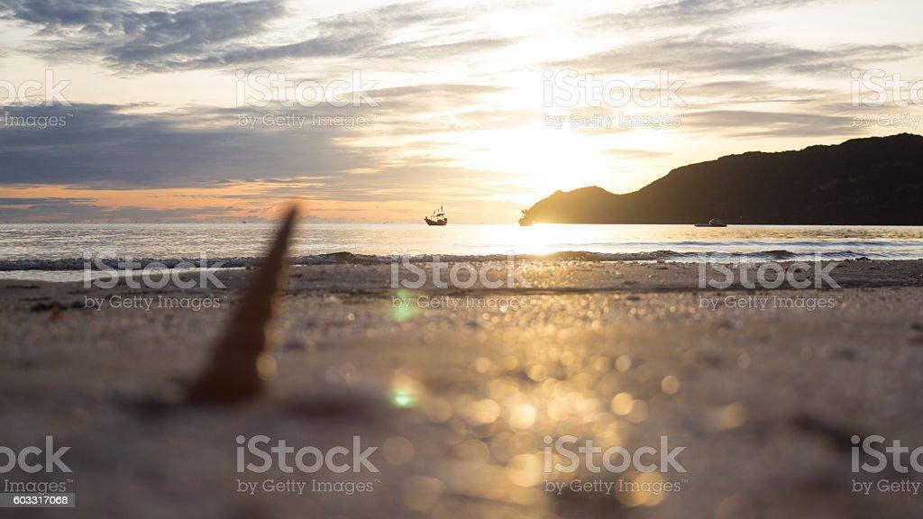 shell on sand beach with morning yellow warm sunset reflect Стоковые фото Стоковая фотография