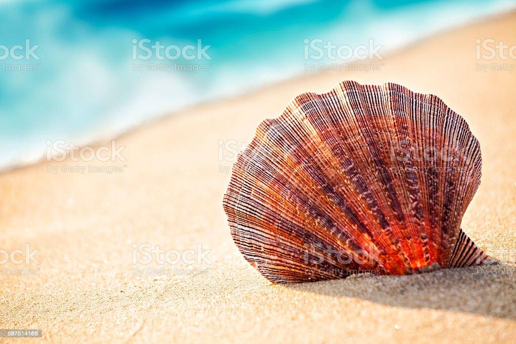 Shell on the beach stock photo