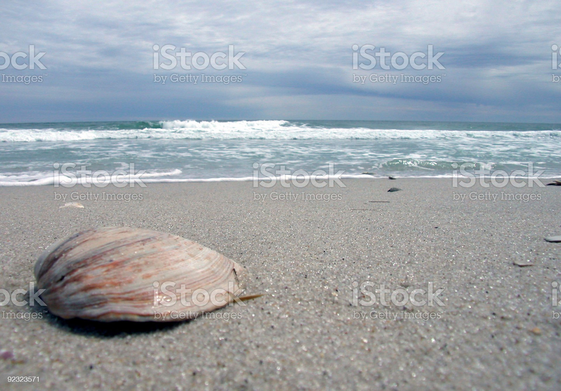 shell on the beach royalty-free stock photo