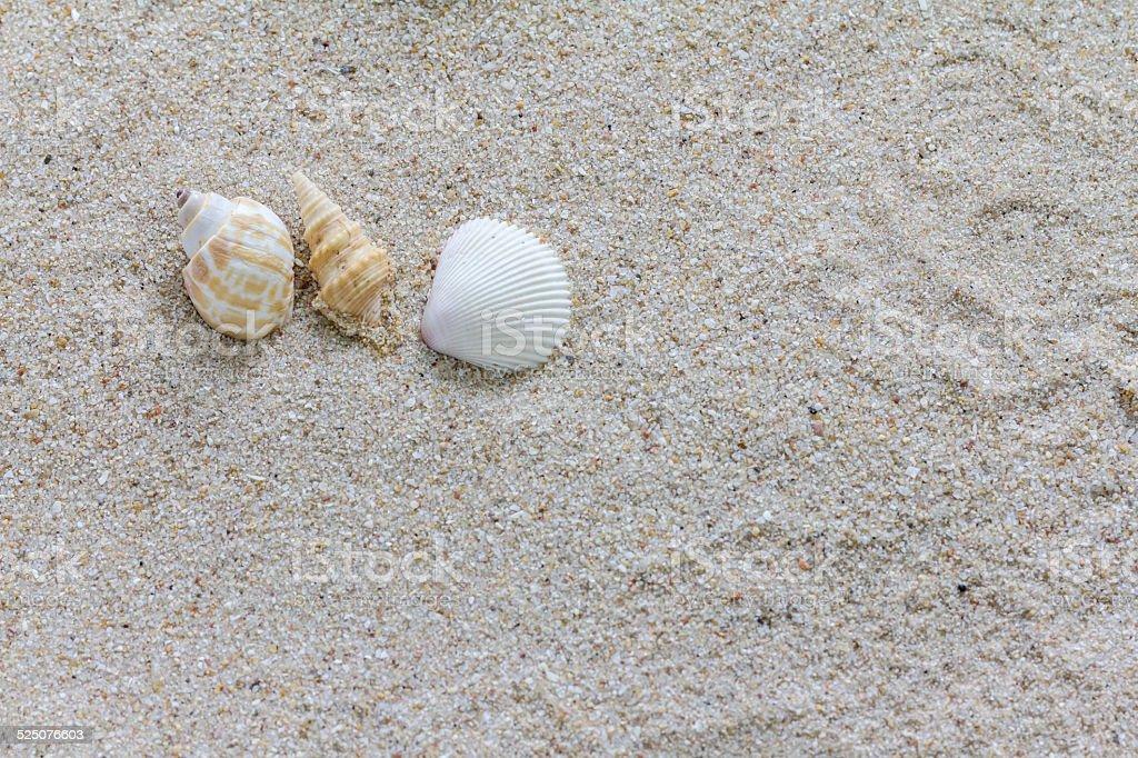 3 shell auf die kleine Steine in sand Lizenzfreies stock-foto