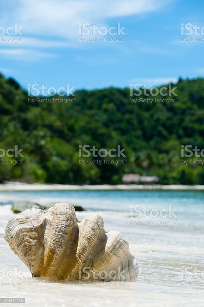 Shell on The white sand beach in front of blue stock photo