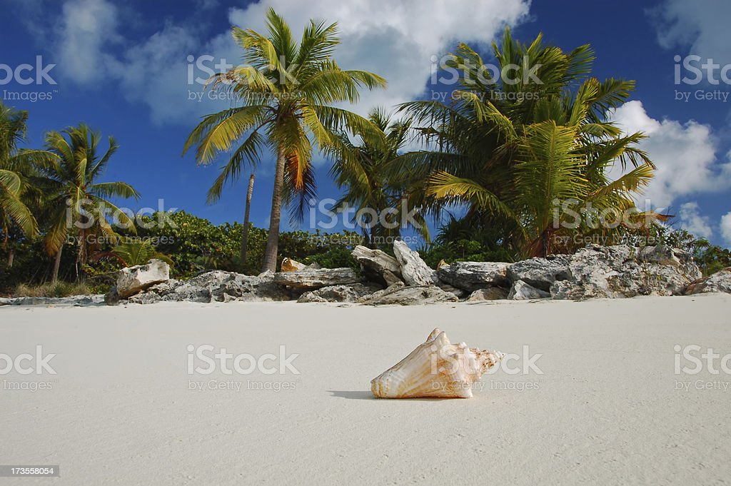 Shell on tropical beach royalty-free stock photo