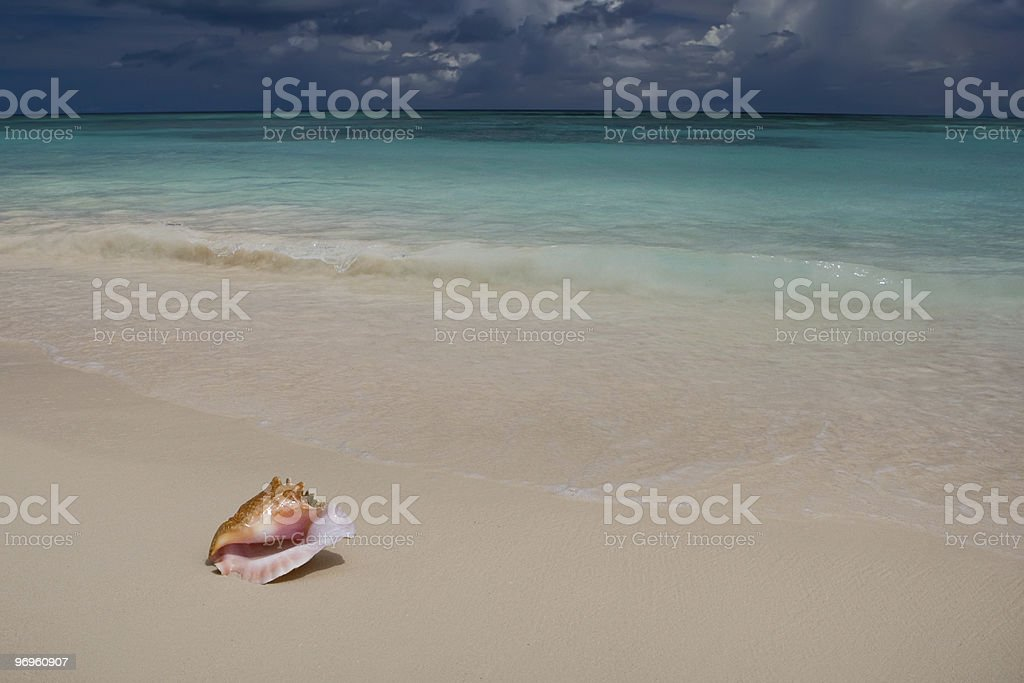 Shell on white sand beach near blue see in summer stock photo