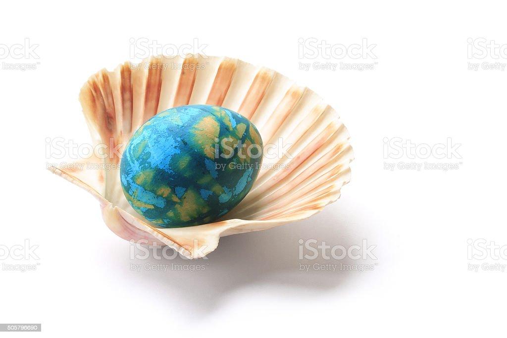 Shell. stock photo